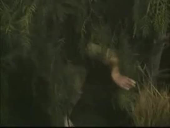 Girl fucking in jungle agree