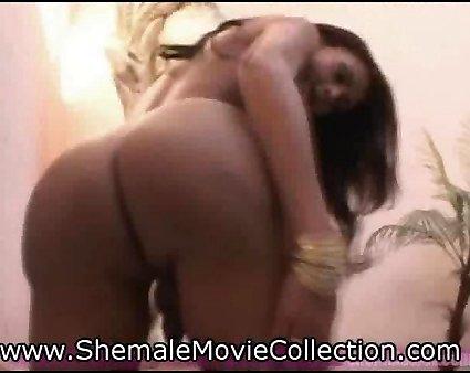 Hired Brandi shemales bang shemales videos