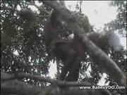 Real african amateur fuck on the tree